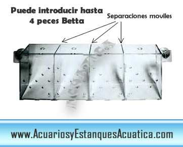 bettera-pez-betta-separador-separacion-acuario-acrilico-1