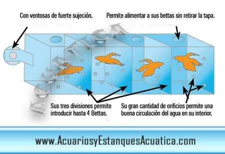 Bettera separador para 4 peces betta acuarios y for Peces de agua dulce para peceras sin oxigeno
