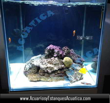 acuario-blau-gran-cubic-238-litros-urna-dulce-marino-pecera-roca-payasos.jpg