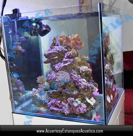 acuario-blau-gran-cubic-238-litros-urna-dulce-marino-pecera-roca.jpg