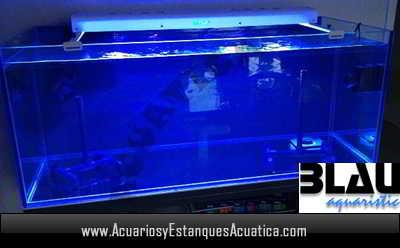 acuario-marino-blau-gran-cubic-230-litros-dulce-perforado-cristal-urna-pecera.jpg