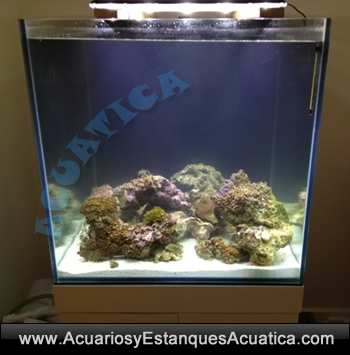 gran-cubic-marine-blau-acuario-marino-con-mueble-vortex-rebosadero-sump-agua-salada-coral-roca-238-2.jpg