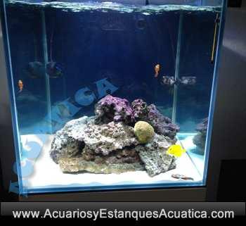 gran-cubic-marine-blau-acuario-marino-con-mueble-vortex-rebosadero-sump-agua-salada-coral-roca-238-3.jpg