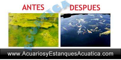estanque-agua-verde-acuario-algas-ultravioleta-uv-c-clarificador.