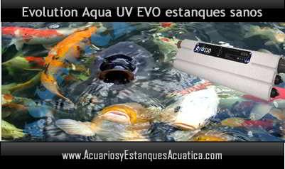 clarificador-agua-verde-uv-c-evo-germicida-esterilizador-elimina-algas-estanque-suspension-banner-3.jpg