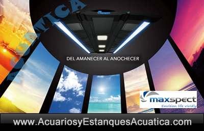 maxspect-recurve-pantallas-led-para-acuarios-corales