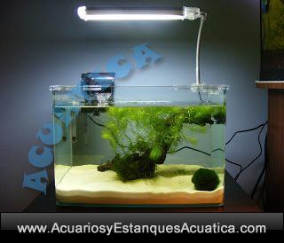 acuario-nano-blau-cubic-agua-dulce-salada-marino-gambario-kit-urna-2.jpg