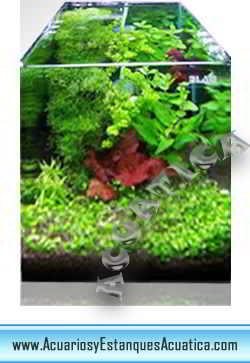acuario-nano-blau-cubic-agua-dulce-salada-marino-1.jpg
