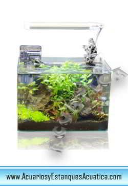 acuario-nano-blau-cubic-agua-dulce-salada-marino-gambario-1.jpg