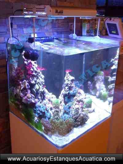 Nano acuario cubic blau para dulce o marino gambario for Filtro acuario marino