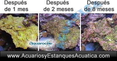 aquaroche-curada-colonizada-bacterias-roca-artificial-acuario-piedra-ceramica-decoracion-filtracion-ornamentacion-pecera-salada